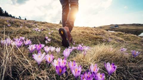 Ein wanderer läuft über moosbedeckte Hügel, auf denen violette Krokusse blühen. Durch vereinzelte Wolken scheint die Sonne.